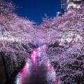 桜名所 東京お花見~雰囲気別の人気スポット