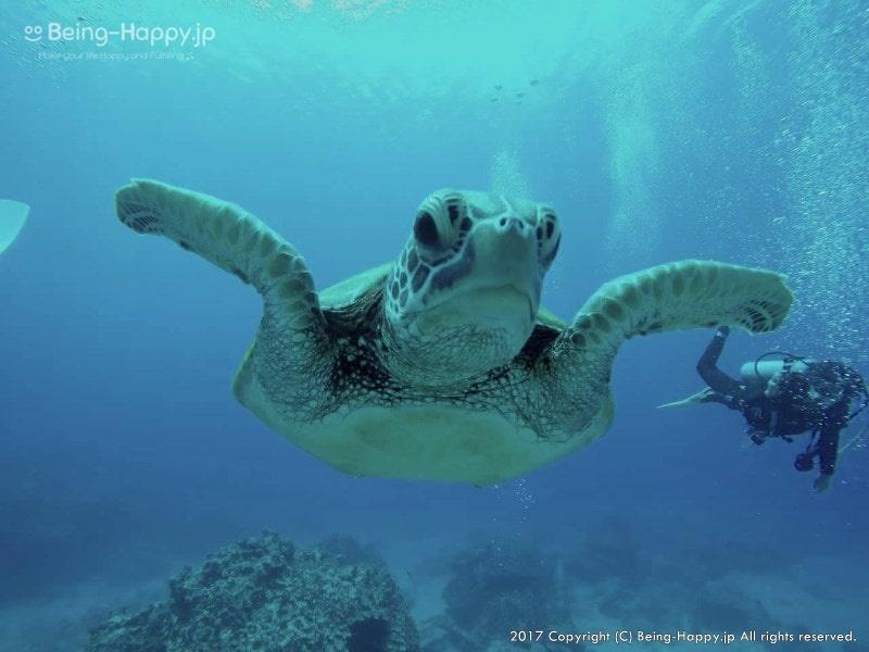ダイビング中に大きな亀が迫ってきた