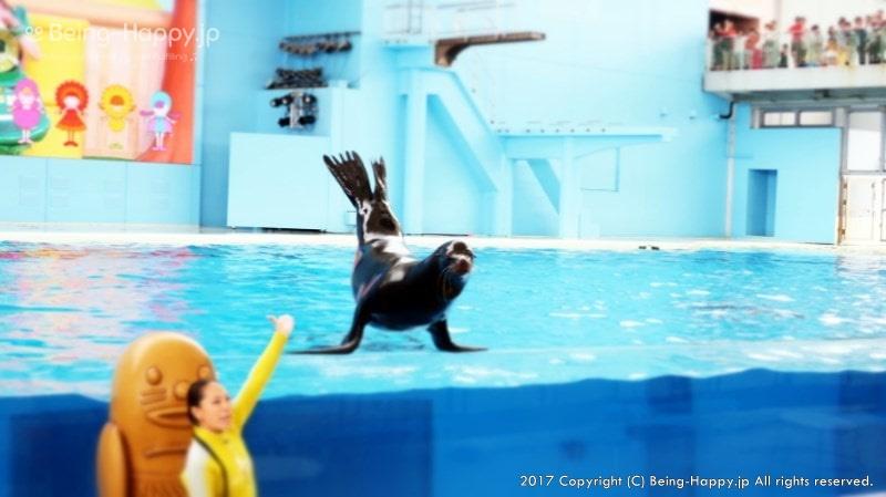 海の動物たちのショーのあしか