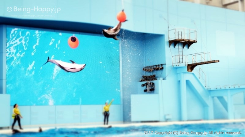 海の動物たちのショーのイルカアクロバットショー