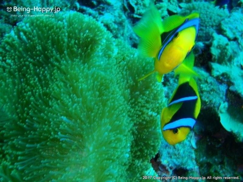 ダイブ中に撮った熱帯魚たち