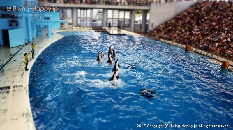横浜・八景島シーパラダイスのショープールとイルカ