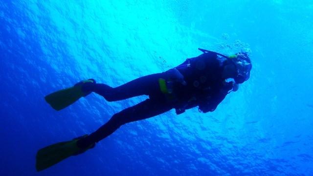 Scuba diving 101