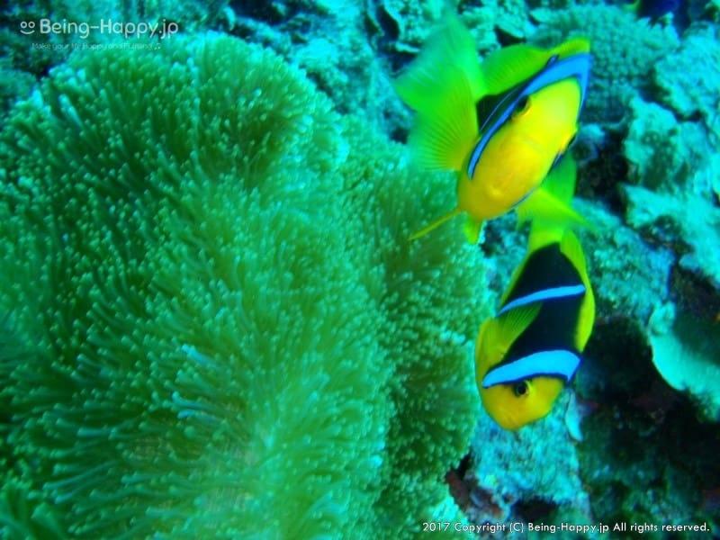 ダイビング中の写真ー熱帯魚