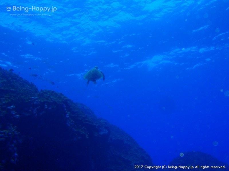 ダイビング中の写真ー人懐こいカメ