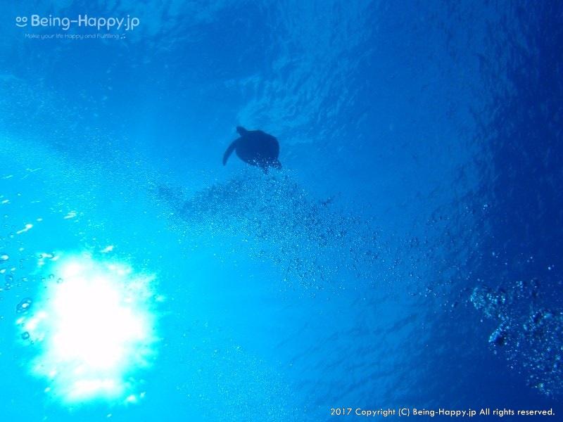 ダイビング中にみた亀の美しい姿
