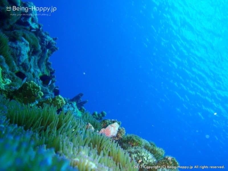 海底からみた写真