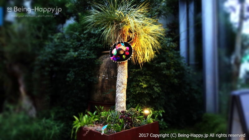 メキシカンな植物@ 代々木ビレッジ VILLAGE photo by 茶子(ちゃこ)