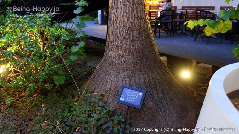 植物につけられている案内のプレート@ 代々木ビレッジ VILLAGE photo by 茶子(ちゃこ)