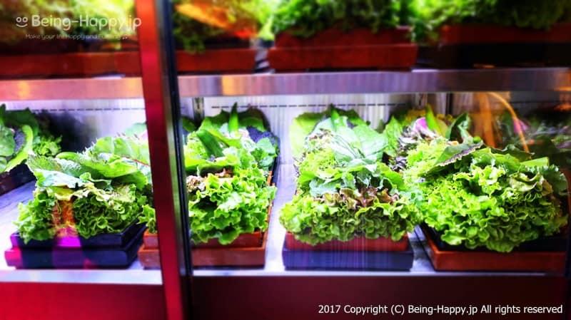韓国焼肉くるむ店内の野菜盛りのショーケース photo by 茶子(ちゃこ)