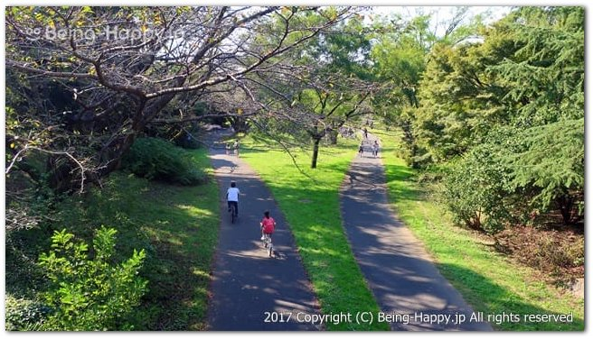 国営昭和記念公園のサイクリングの様子