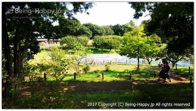 国営昭和記念公園のこもれびの里