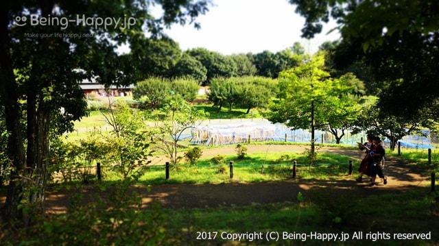 昭和記念公園 - こもれびの里 田んぼ