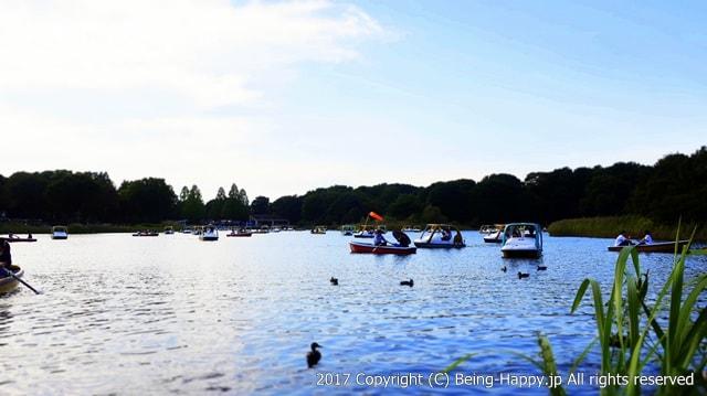 昭和記念公園 - 水鳥の池のボート乗り場
