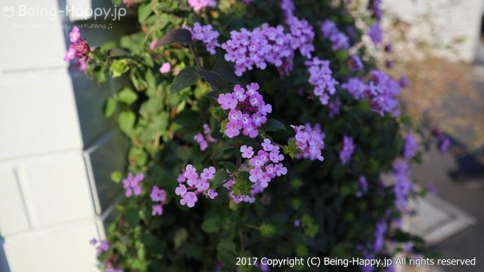 近所に咲く花