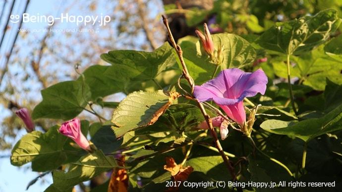 近所の花をeos m100で撮ったもの