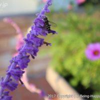 EOS M100で花を撮影