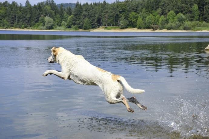犬がジャンプー1/1600秒