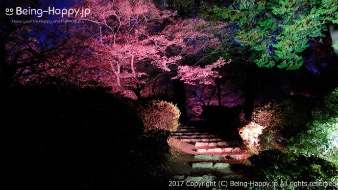 紅葉が桜のようにライトアップされて