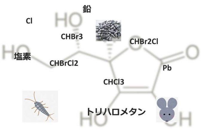 塩素、鉛、トリハロメタンなど