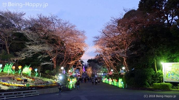 豊島園の桜