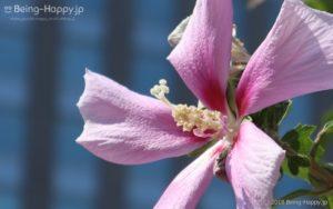 キャノン EOS Kiss Mで撮った近所の野花
