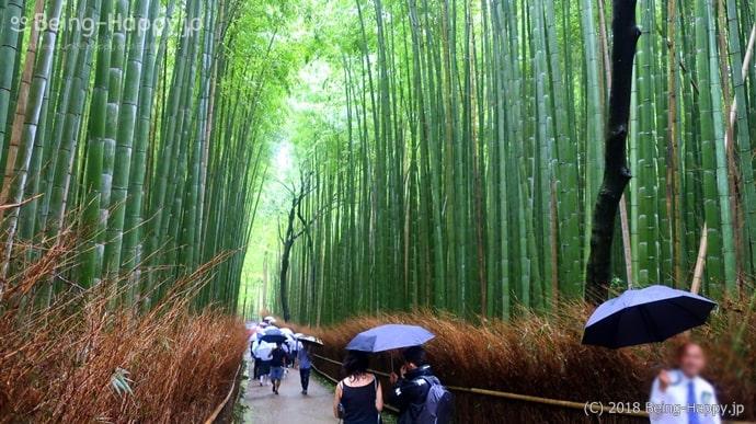 嵐山の竹林の小路