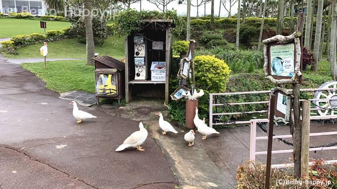 東南植物楽園 待ち構える鳥