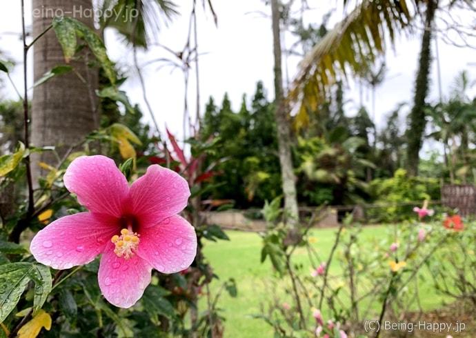 東南植物楽園の花