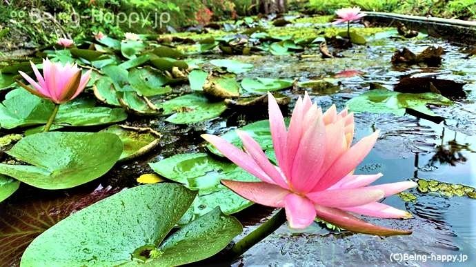 東南植物楽園 植物園
