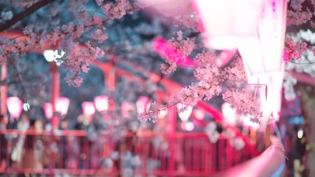 桜を見ながら散歩のイメージ