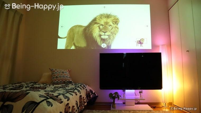 原寸大に表示されたライオン。